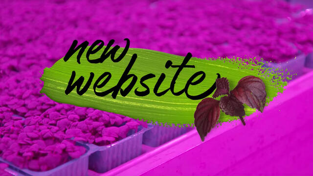 Koppert Cress launches new website with refined taste