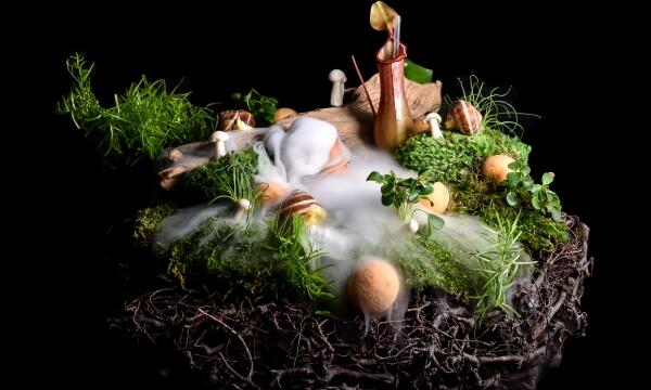 Use of Koppert Cress by David Faure