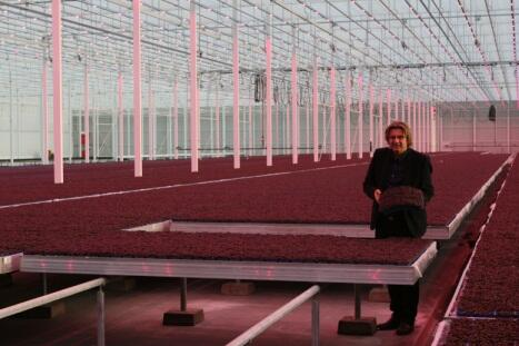 First cress harvested with LED technology