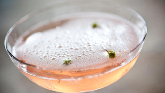 The Dushi Button – a cress in a cocktail