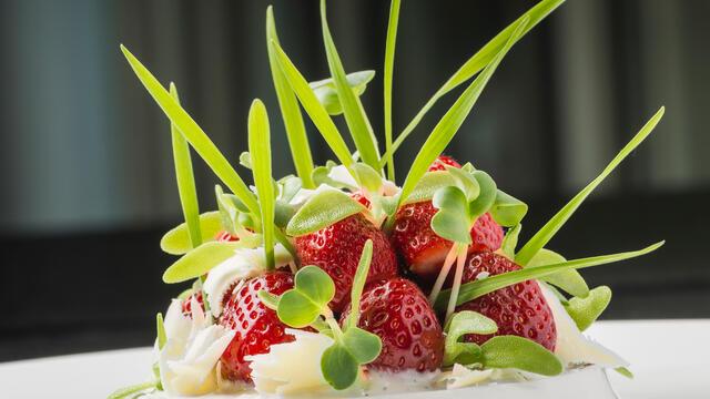 Wilde aardbeien, crème van yoghurt en vanille met Wheat Grass, Honny Cress en Daikon Cress