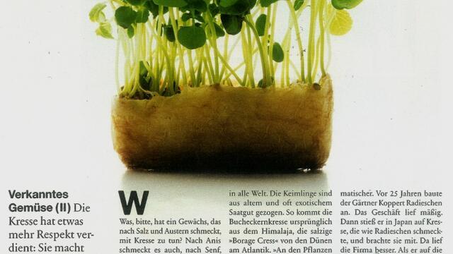 Koppert Cress im Süddeutsche Zeitung Magazin