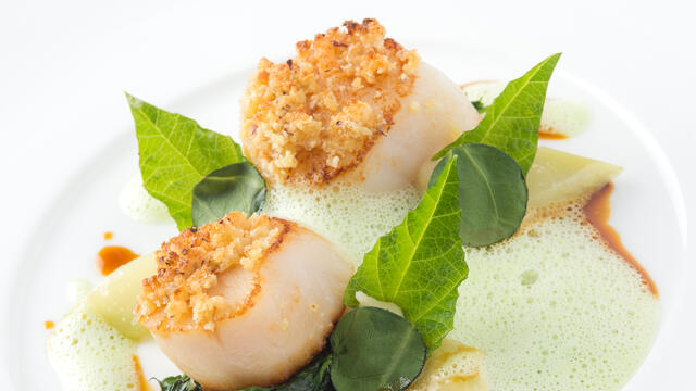 Scallop, Salad Pea, hazelnut, poultry stock
