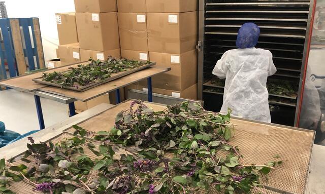 Zallotti Blossom takken worden gedroogd bij Greenco