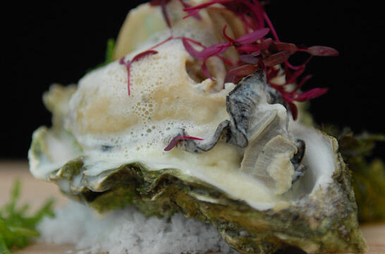 Poached Oysters in Milk on a Cauliflower Mousseline Salad
