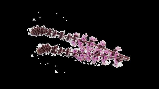 Koppert Cress presenté Zallotti Blossom