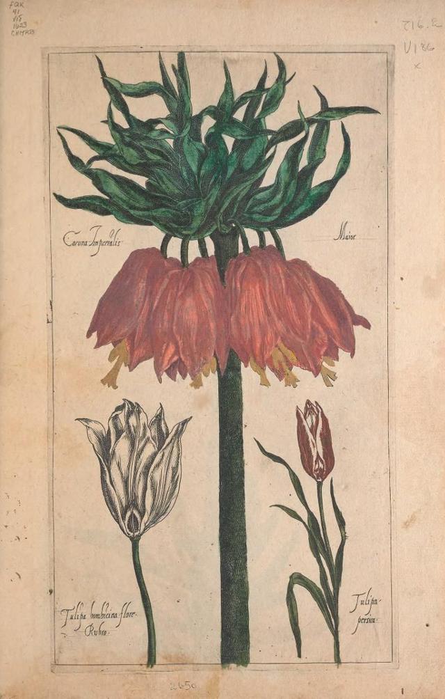 Source: Biodiversity Heritage Library - Le jardin du Roy tres chrestien, Loys XIII, Roy de France et de Navare