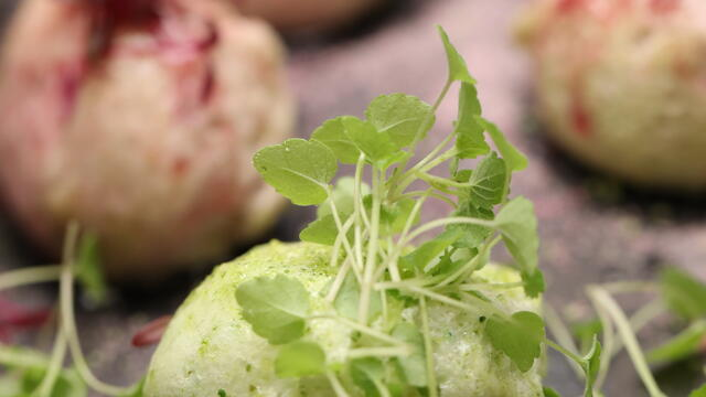 Floating islands with Atsina Cress and Scarlet Cress sugar