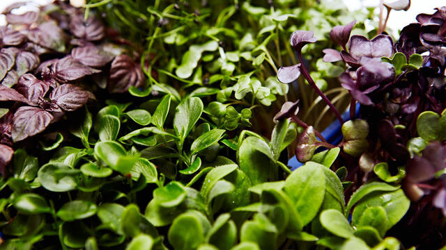 SysBioSim and Koppert Cress - Healthy living, one bite at a time